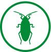 Prusaki, karaluch, pluskwy – jak zwalczyć?