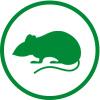 deratyzacja - Zwalczanie szczurów - deratyzacja!