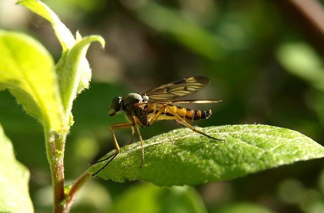 Środowisko wolne od komarów, kleszczy i mrówek.