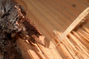 drewno 300x200 - Porady