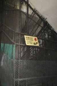 zd szczury kalisz usuwanie  200x300 - Porady